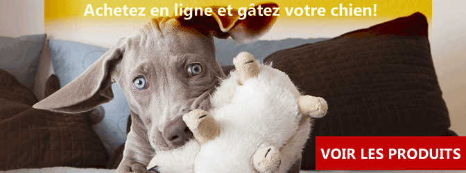 Amazon-banniere-animalerie